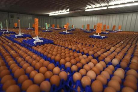 About 1 million eggs sat in cold storage at Pete and Gerry's Organics, an egg distributor in Monroe, N.H., that gets eggs from 30 farms in the Northeast.)